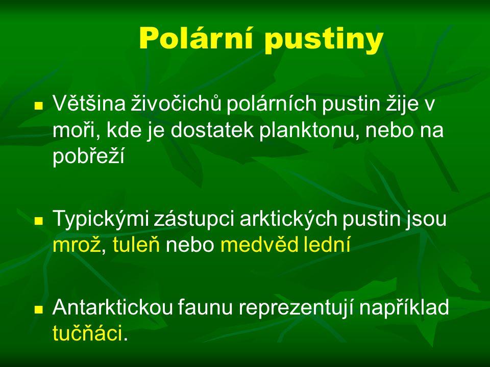 Polární pustiny Většina živočichů polárních pustin žije v moři, kde je dostatek planktonu, nebo na pobřeží.