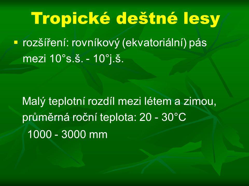 Tropické deštné lesy rozšíření: rovníkový (ekvatoriální) pás