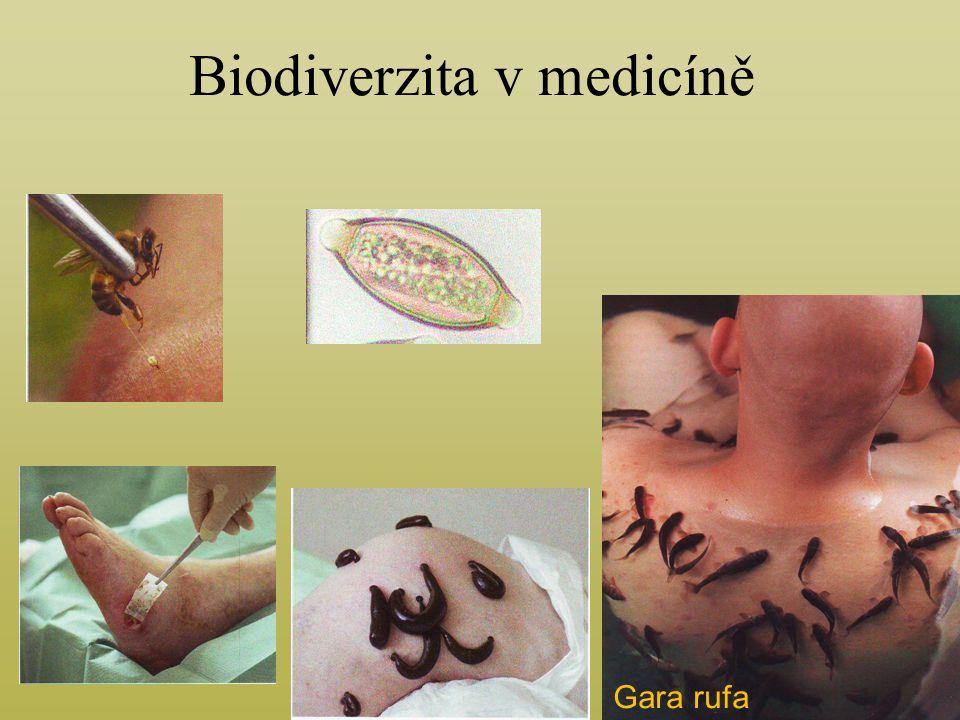 Biodiverzita v medicíně