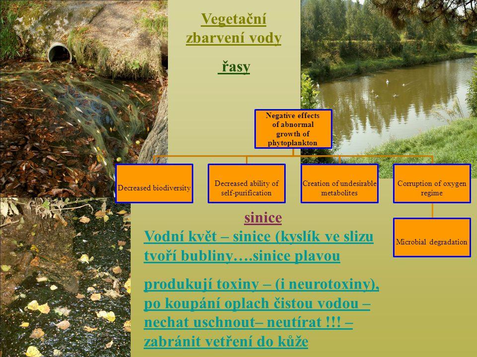 Vegetační zbarvení vody
