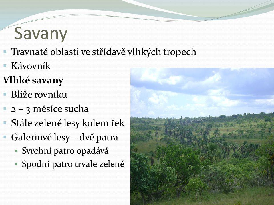 Savany Travnaté oblasti ve střídavě vlhkých tropech Kávovník