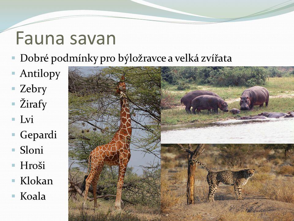 Fauna savan Dobré podmínky pro býložravce a velká zvířata Antilopy