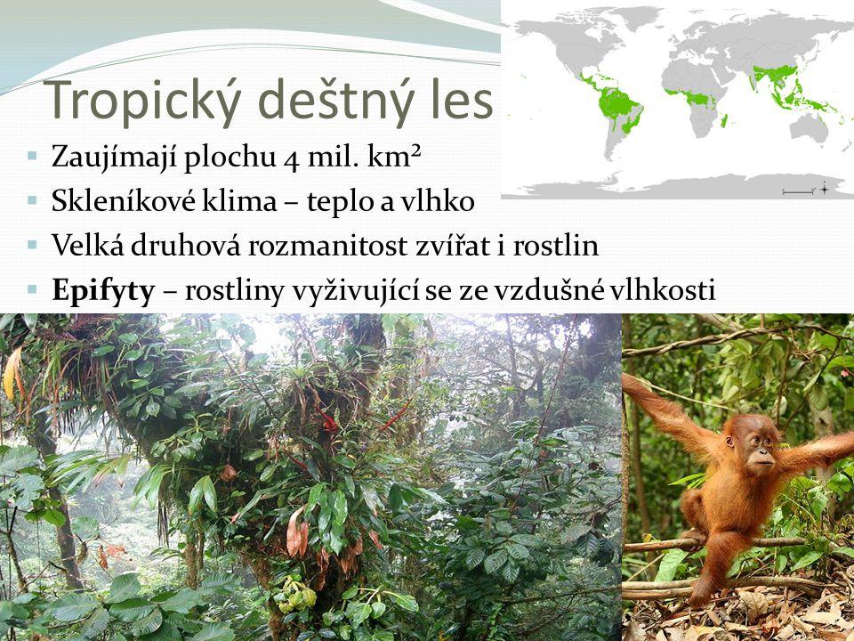 Tropický deštný les Zaujímají plochu 4 mil. km²