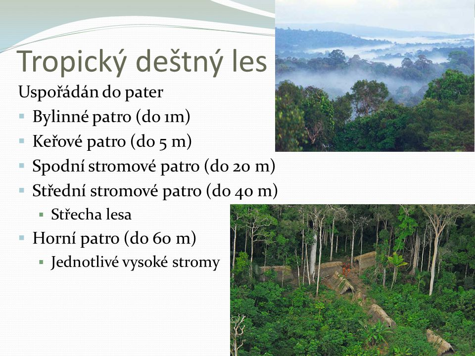 Tropický deštný les Uspořádán do pater Bylinné patro (do 1m)