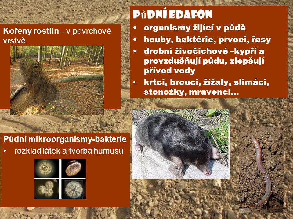 půdní edafon organismy žijící v půdě houby, baktérie, prvoci, řasy