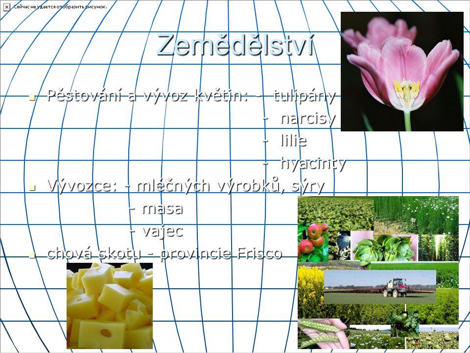 Zemědělství Pěstování a vývoz květin: - tulipány - narcisy - lilie