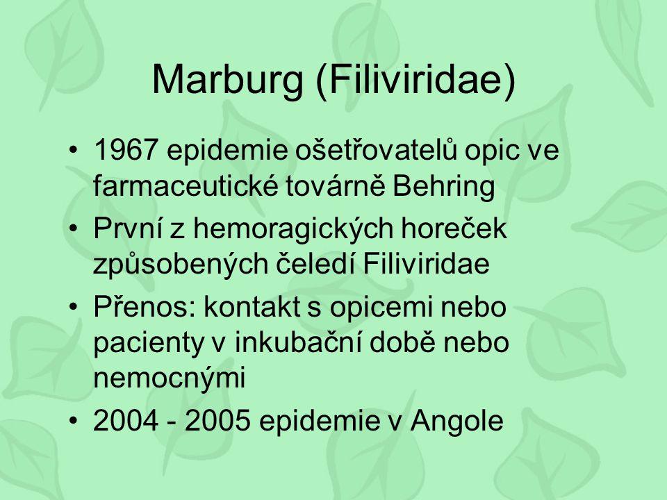Marburg (Filiviridae)