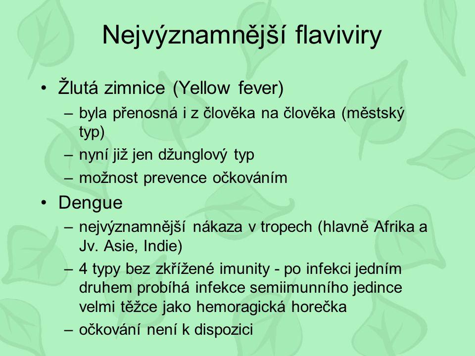 Nejvýznamnější flaviviry