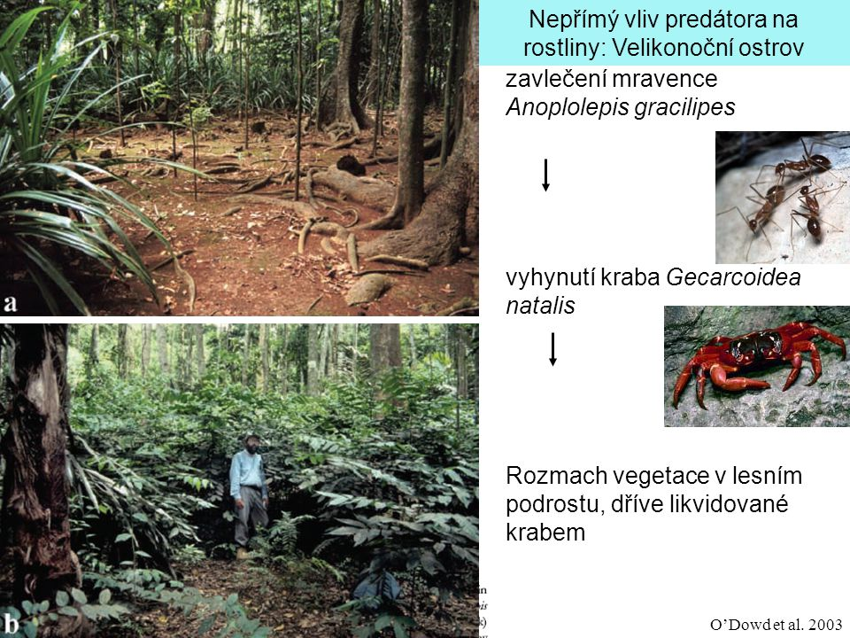 Nepřímý vliv predátora na rostliny: Velikonoční ostrov