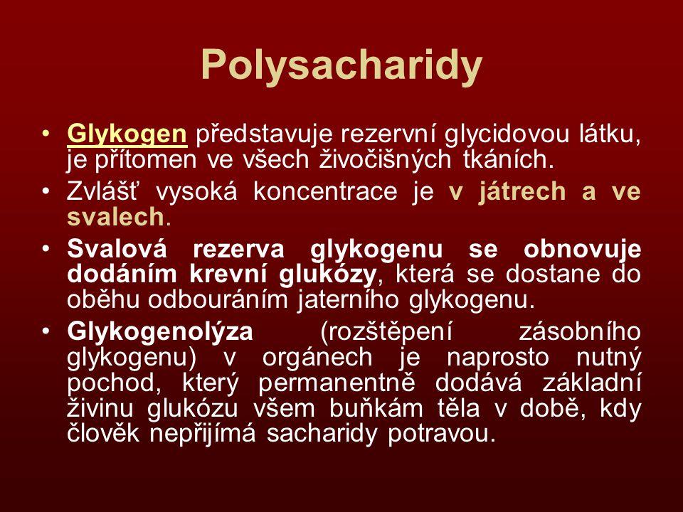 Polysacharidy Glykogen představuje rezervní glycidovou látku, je přítomen ve všech živočišných tkáních.