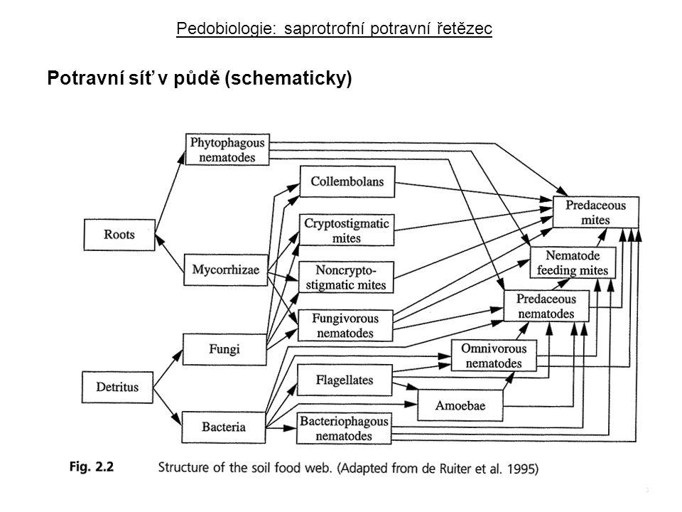 Potravní síť v půdě (schematicky)