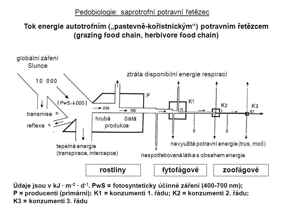 Pedobiologie: saprotrofní potravní řetězec