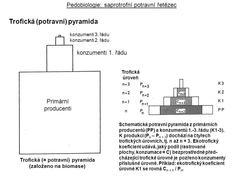 Trofická (= potravní) pyramida