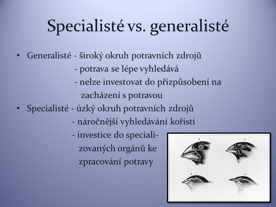 Specialisté vs. generalisté