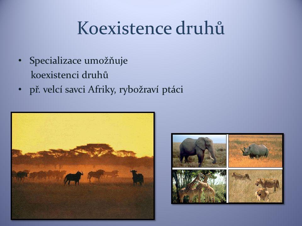 Koexistence druhů Specializace umožňuje koexistenci druhů