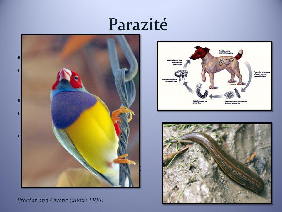 Parazité Endoparazité Ektoparazité Echinococcus multilocularis