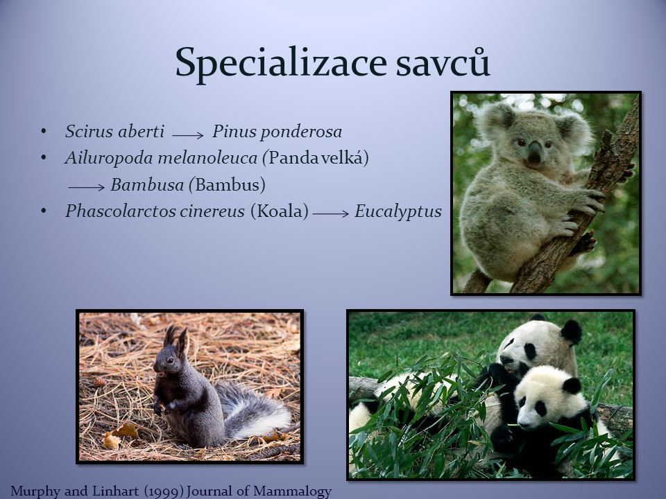 Specializace savců Scirus aberti Pinus ponderosa