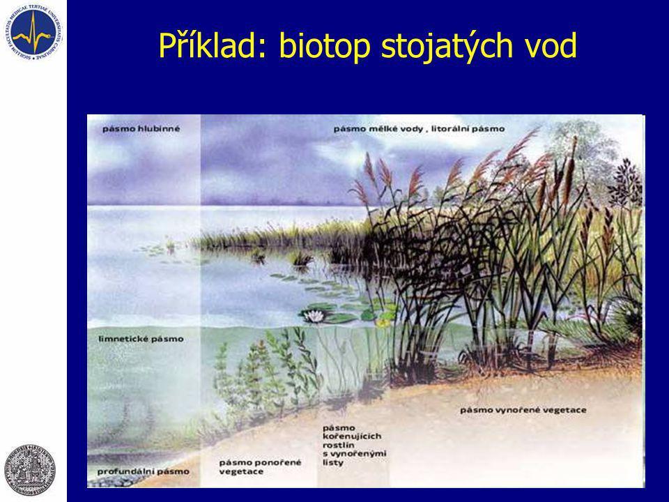 Příklad: biotop stojatých vod
