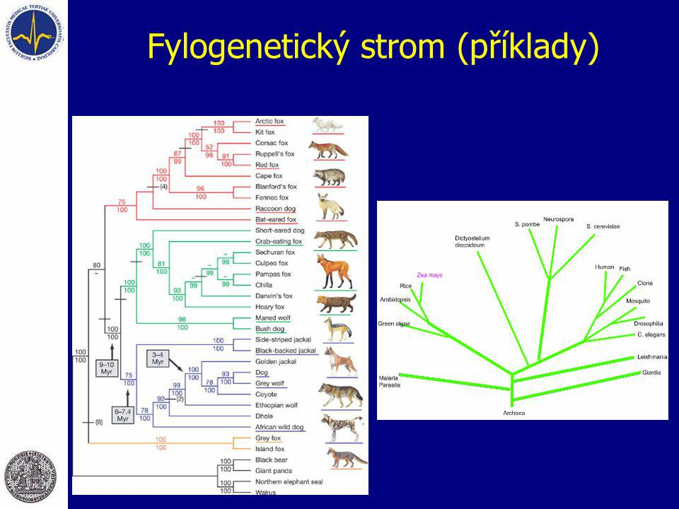 Fylogenetický strom (příklady)