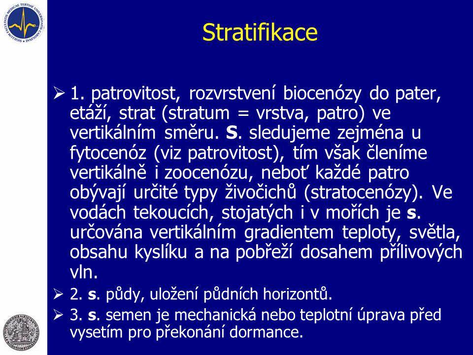 Stratifikace