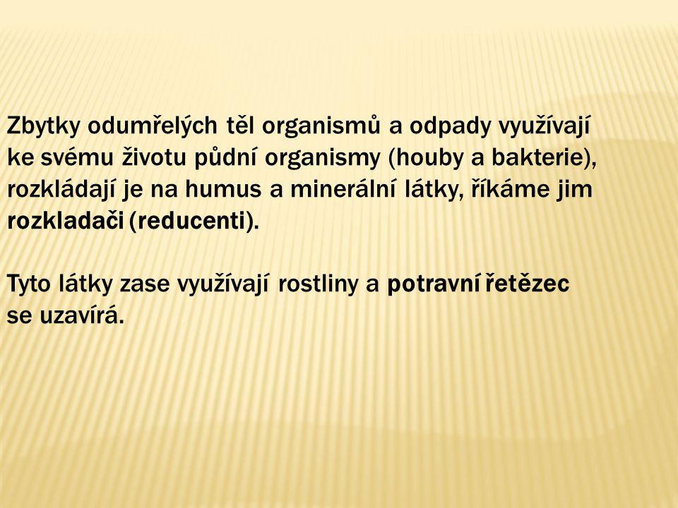 Zbytky odumřelých těl organismů a odpady využívají