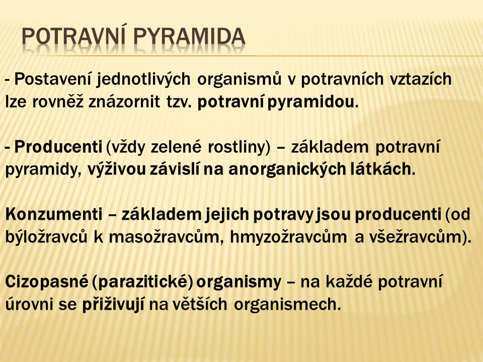 Potravní pyramida - Postavení jednotlivých organismů v potravních vztazích lze rovněž znázornit tzv. potravní pyramidou.
