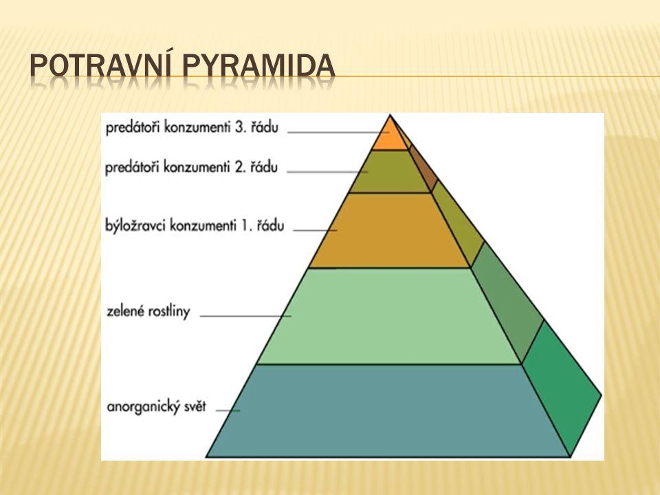Potravní pyramida