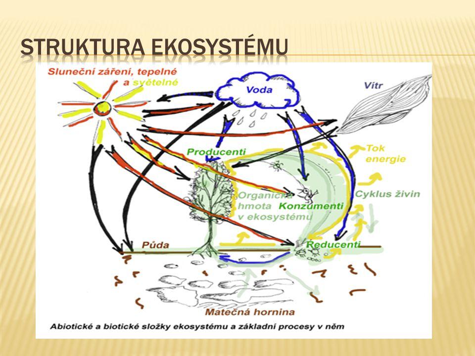 Struktura ekosystému