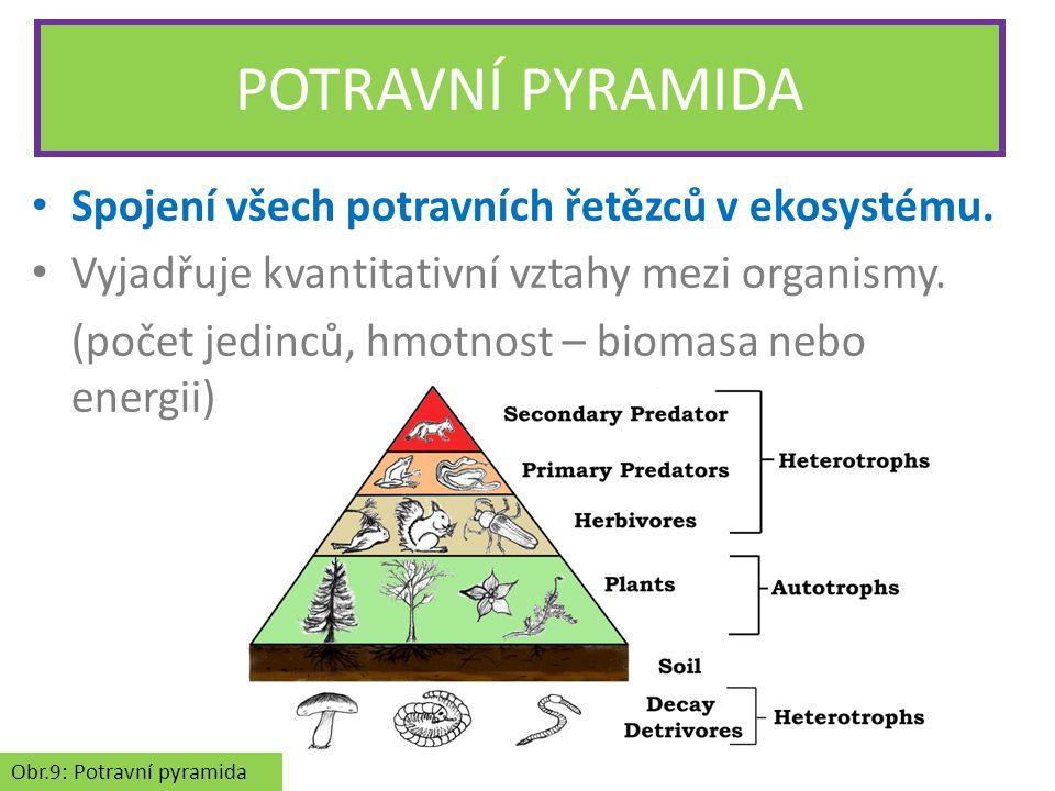 POTRAVNÍ PYRAMIDA Spojení všech potravních řetězců v ekosystému.