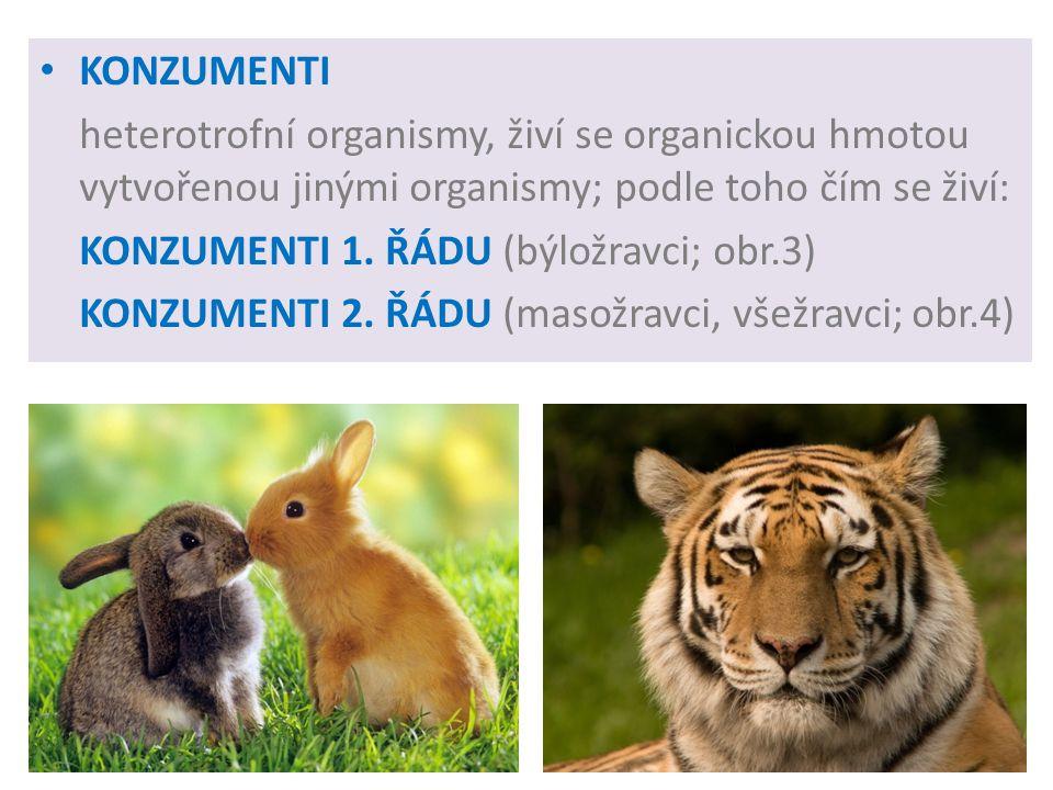 KONZUMENTI heterotrofní organismy, živí se organickou hmotou vytvořenou jinými organismy; podle toho čím se živí: