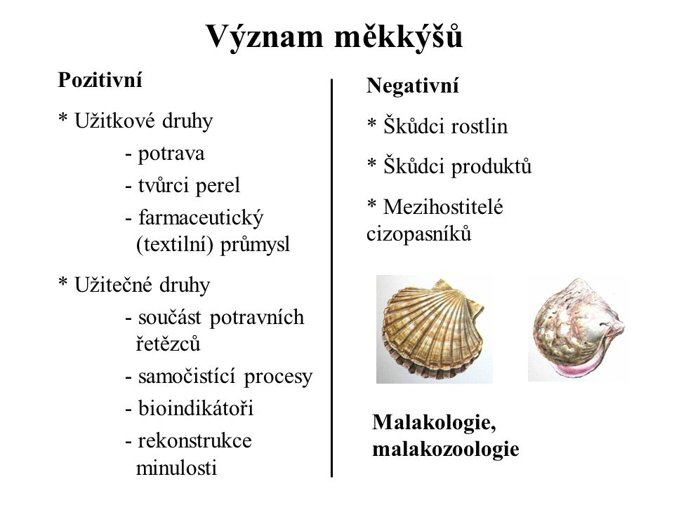 Význam měkkýšů Pozitivní Negativní Užitkové druhy Škůdci rostlin