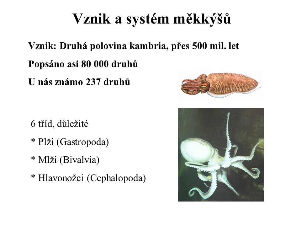 Vznik a systém měkkýšů Vznik: Druhá polovina kambria, přes 500 mil. let. Popsáno asi 80 000 druhů.
