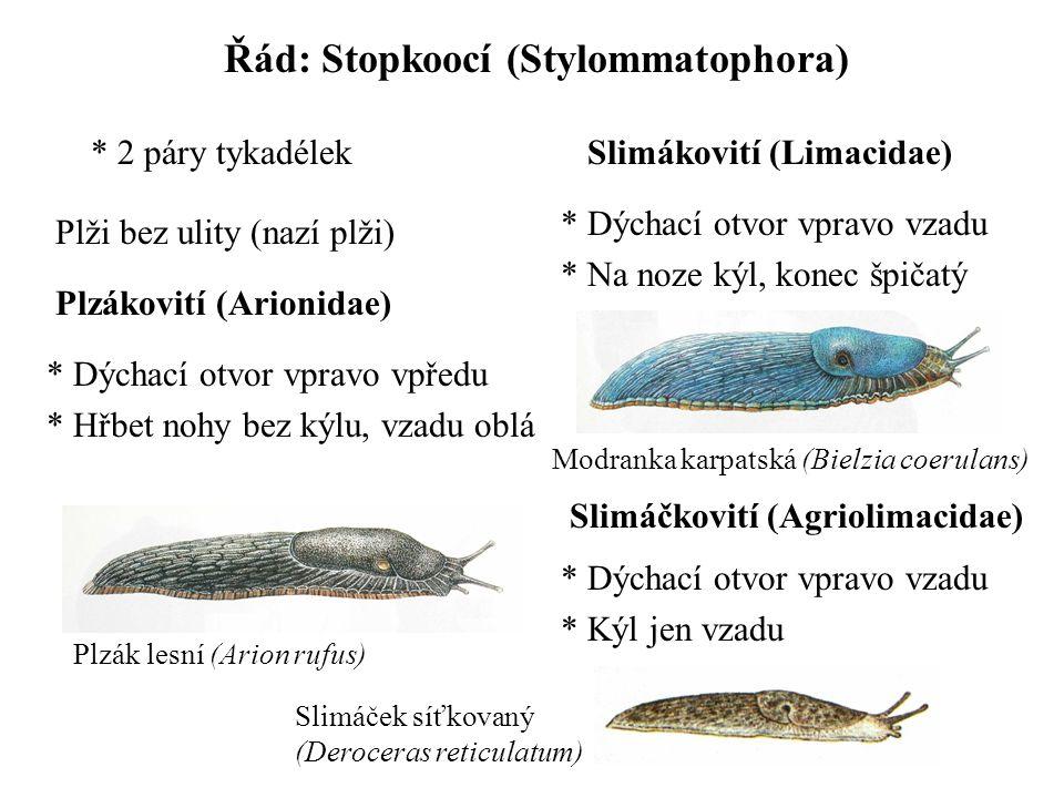 Řád: Stopkoocí (Stylommatophora)