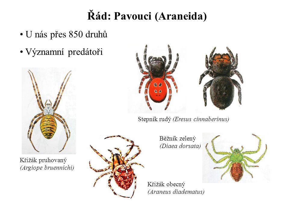 Řád: Pavouci (Araneida)