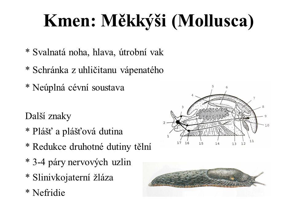Kmen: Měkkýši (Mollusca)