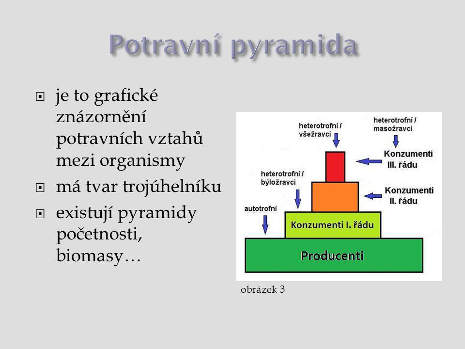 Potravní pyramida je to grafické znázornění potravních vztahů mezi organismy. má tvar trojúhelníku.