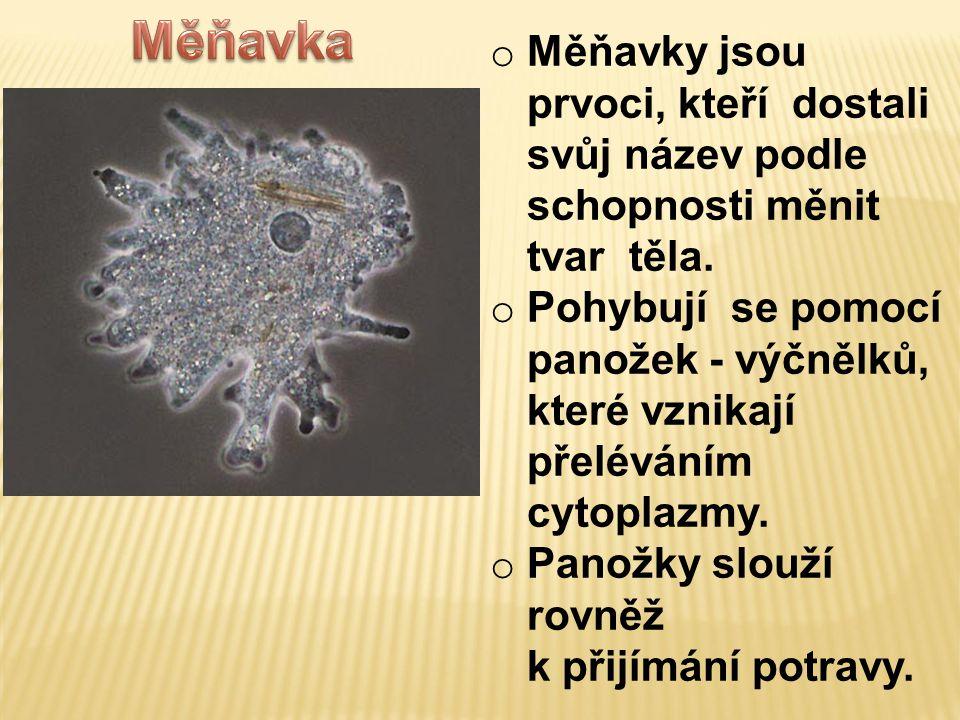 Měňavka Měňavky jsou prvoci, kteří dostali svůj název podle schopnosti měnit tvar těla.