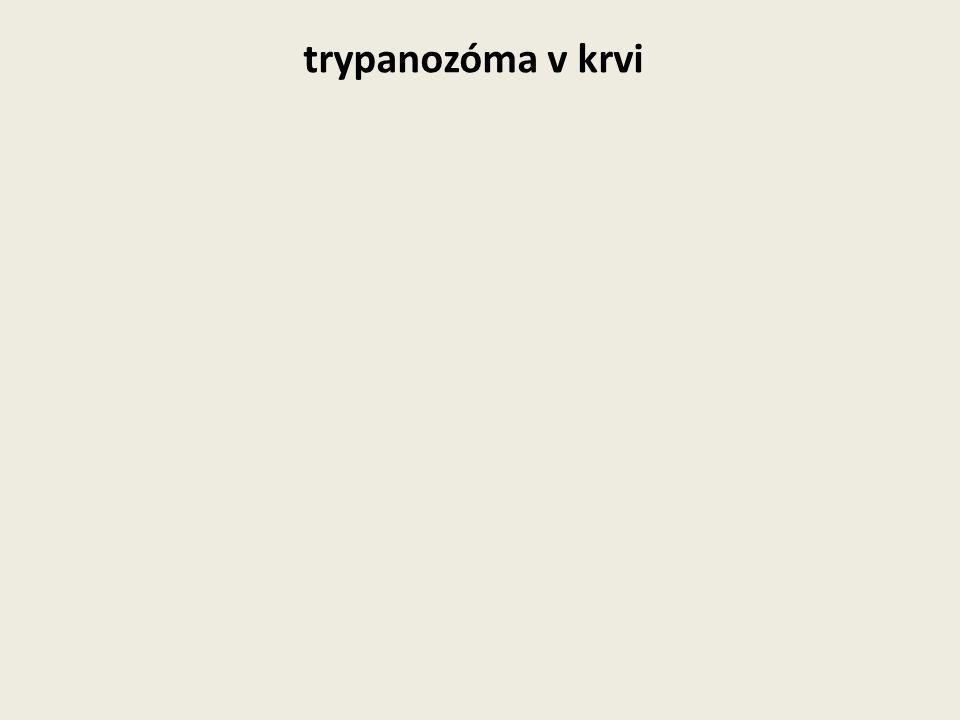 trypanozóma v krvi