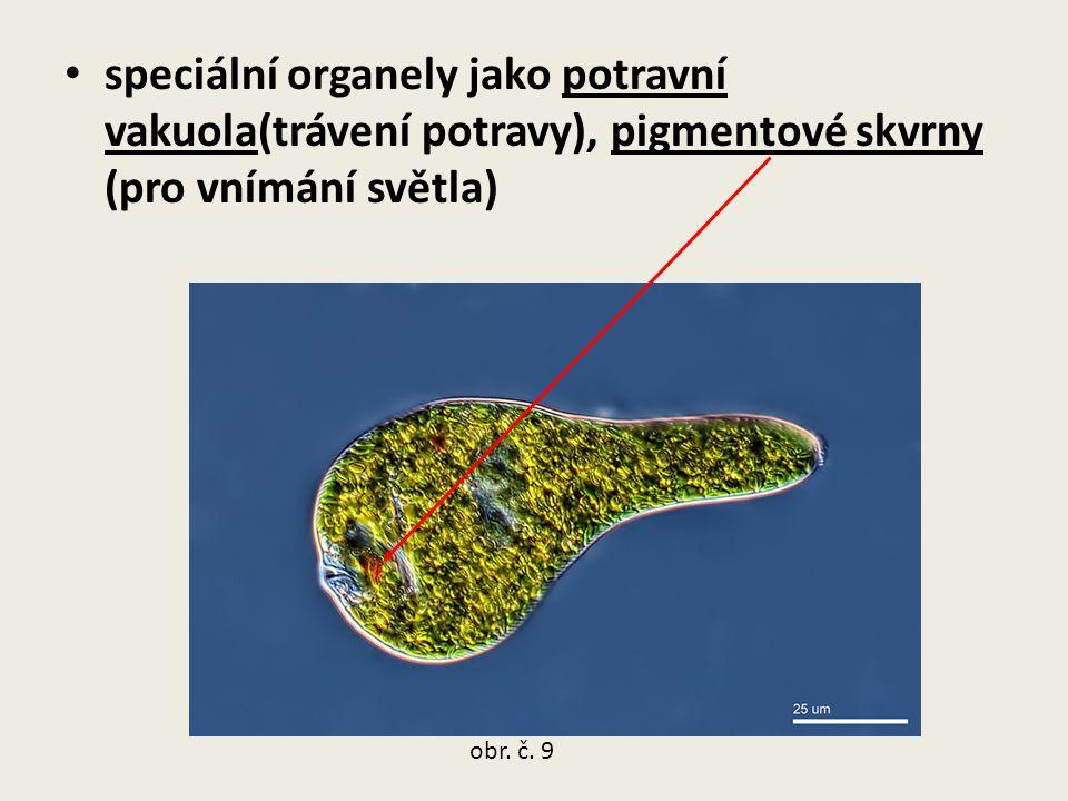 speciální organely jako potravní vakuola(trávení potravy), pigmentové skvrny (pro vnímání světla)