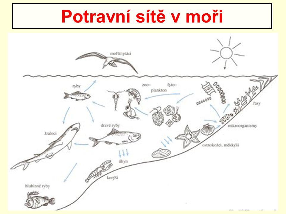 Potravní sítě v moři