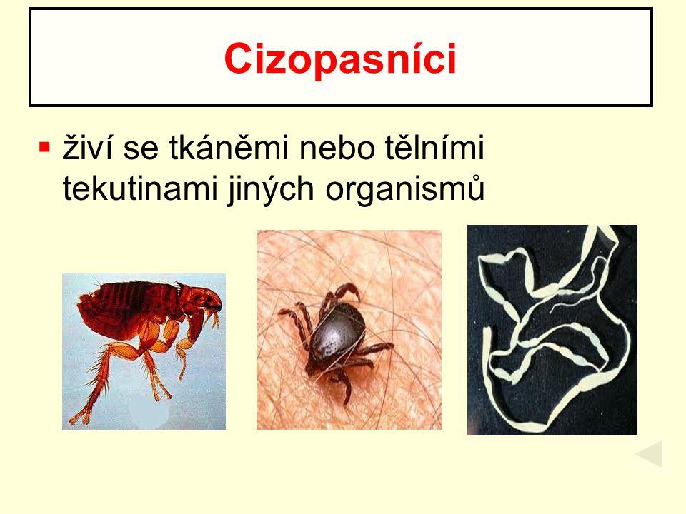 Cizopasníci živí se tkáněmi nebo tělními tekutinami jiných organismů