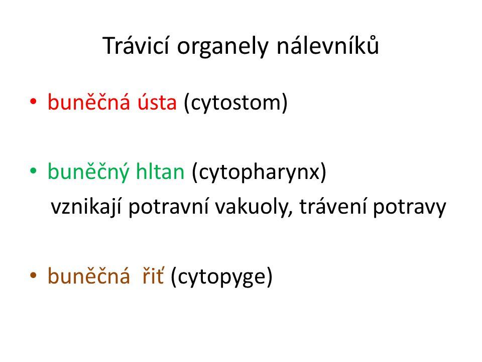 Trávicí organely nálevníků