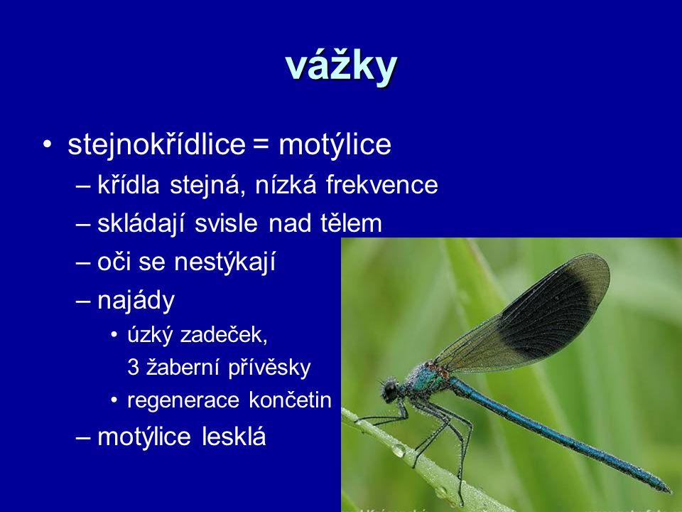 vážky stejnokřídlice = motýlice křídla stejná, nízká frekvence