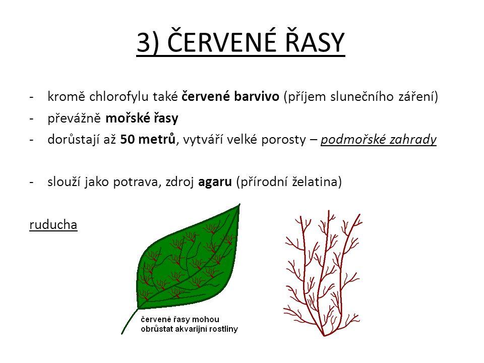 3) ČERVENÉ ŘASY - kromě chlorofylu také červené barvivo (příjem slunečního záření) převážně mořské řasy.