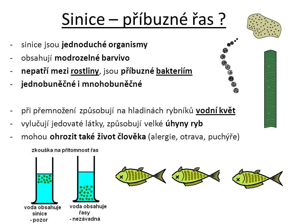 Sinice – příbuzné řas sinice jsou jednoduché organismy