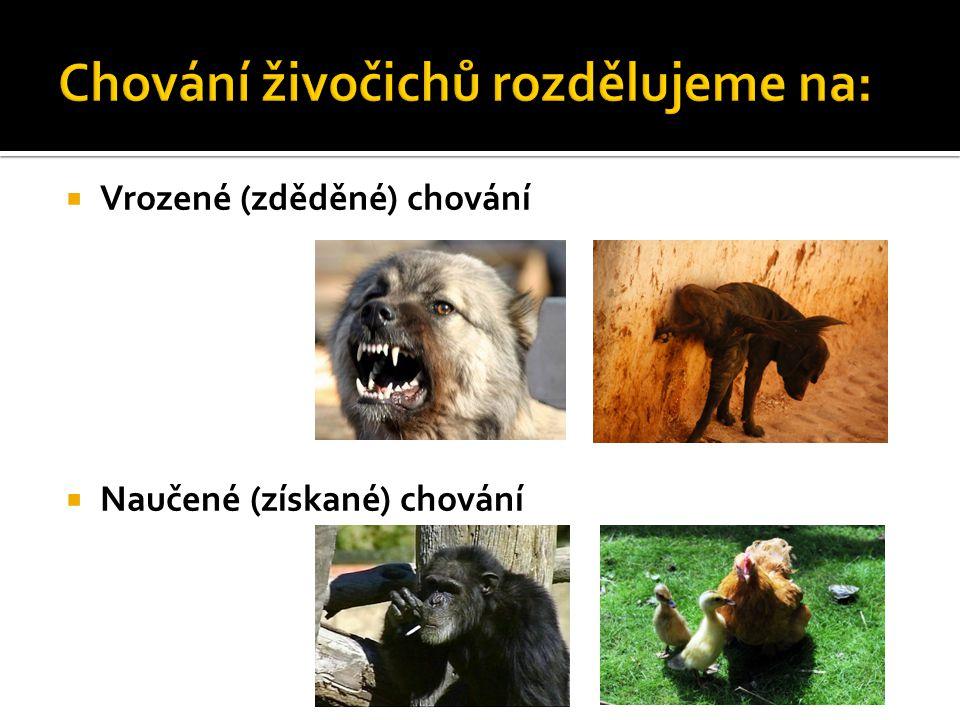 Chování živočichů rozdělujeme na: