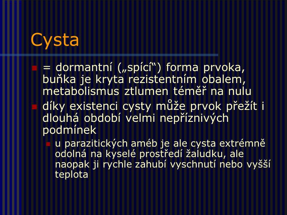 """Cysta = dormantní (""""spící ) forma prvoka, buňka je kryta rezistentním obalem, metabolismus ztlumen téměř na nulu."""