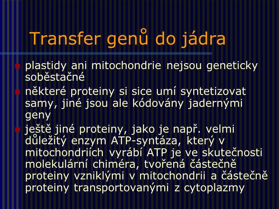Transfer genů do jádra plastidy ani mitochondrie nejsou geneticky soběstačné.