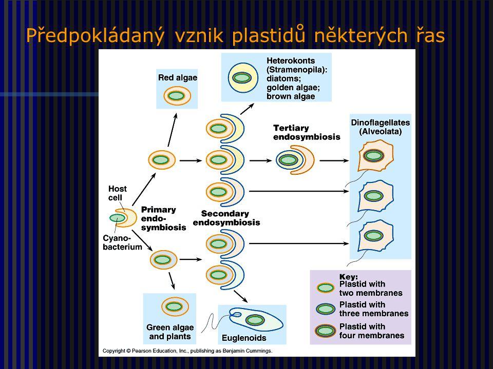 Předpokládaný vznik plastidů některých řas