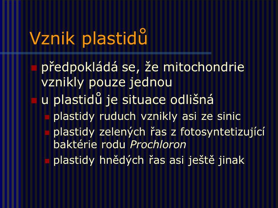 Vznik plastidů předpokládá se, že mitochondrie vznikly pouze jednou